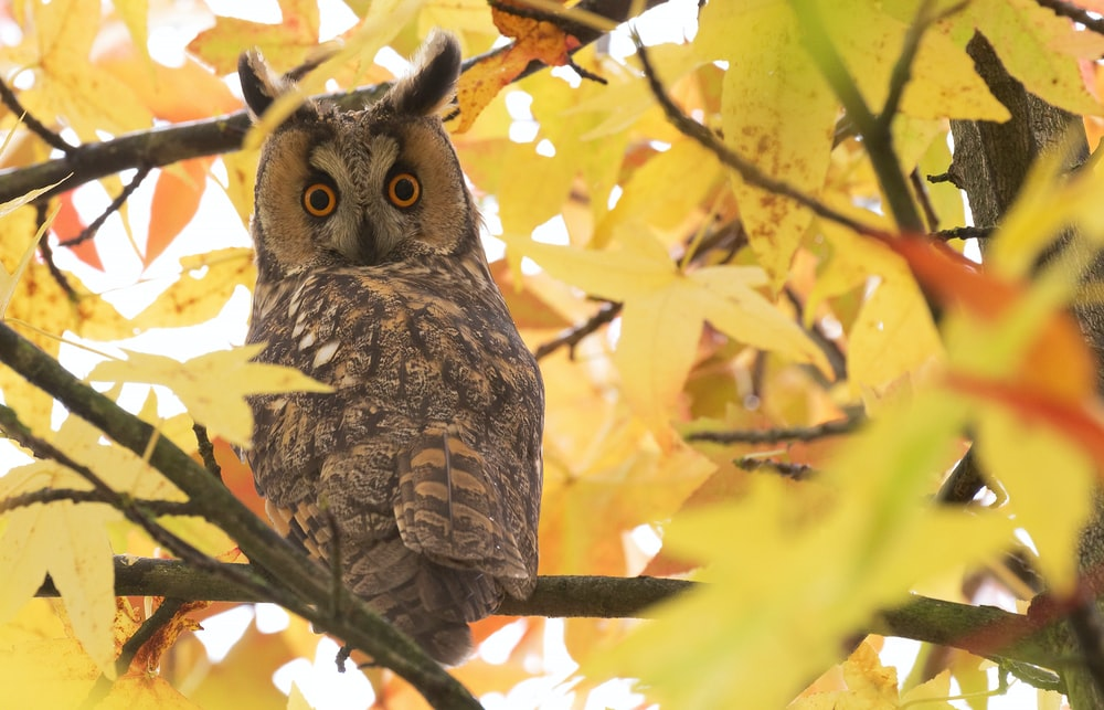 gray owl on a tree branch