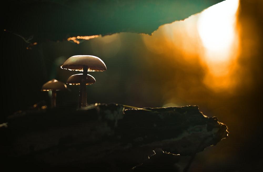 closeup photo of mushroom during golden hour