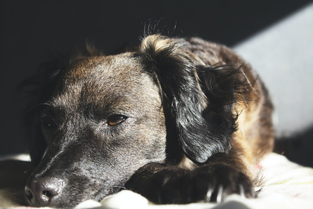 photo of brown and black coated dog