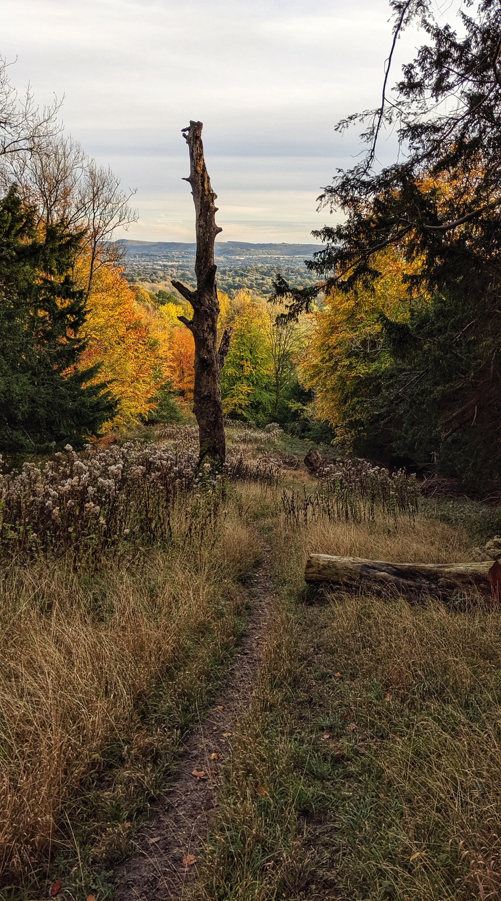 pathway with grass surrounded by trees
