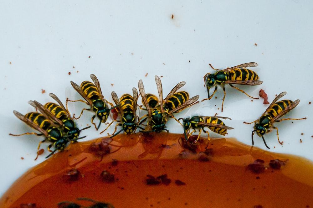 yellow wasps