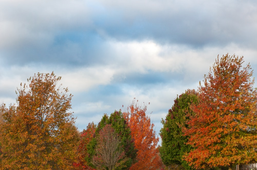 orange, green, and yellow trees