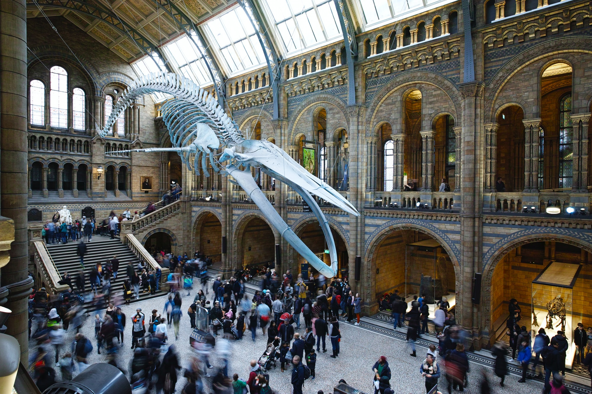 The Blue Whale Skeleton towering over the crowd at the Natural History Museum in London