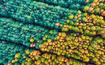 aerial photography of forest with trees reef teams background