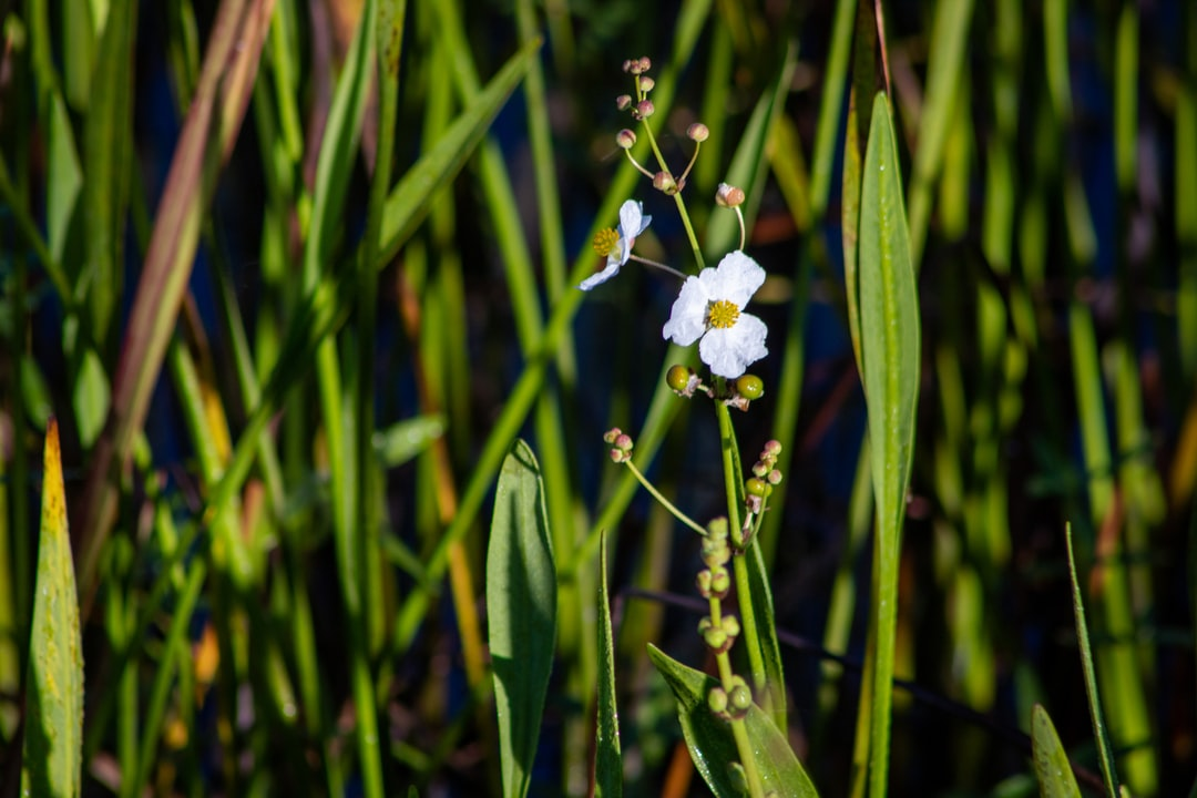 Swamp grass and flowers at the Blue Elbow Swamp in Orange, TX.