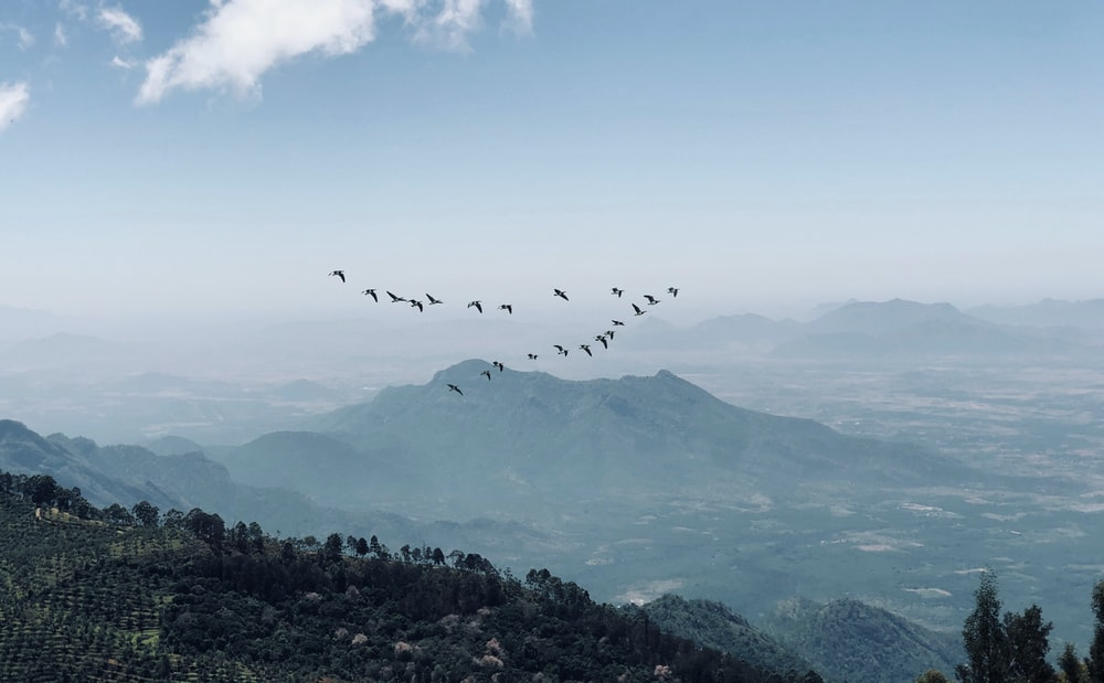 midair birds and mountain scnery