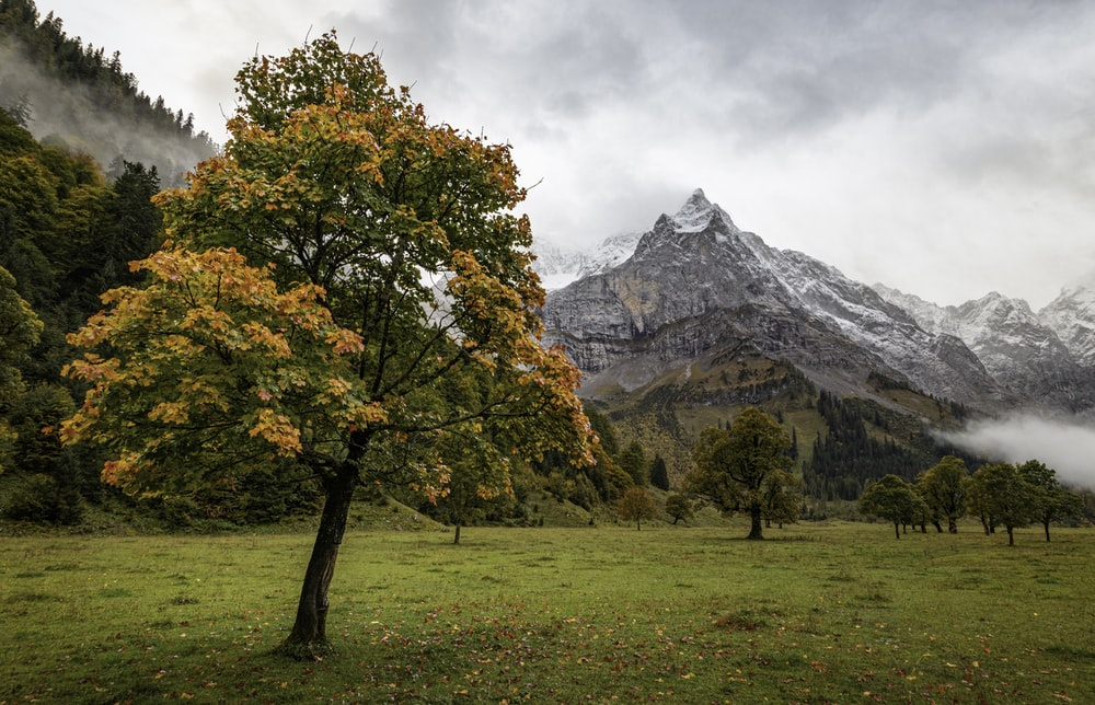 green-leafedd tree
