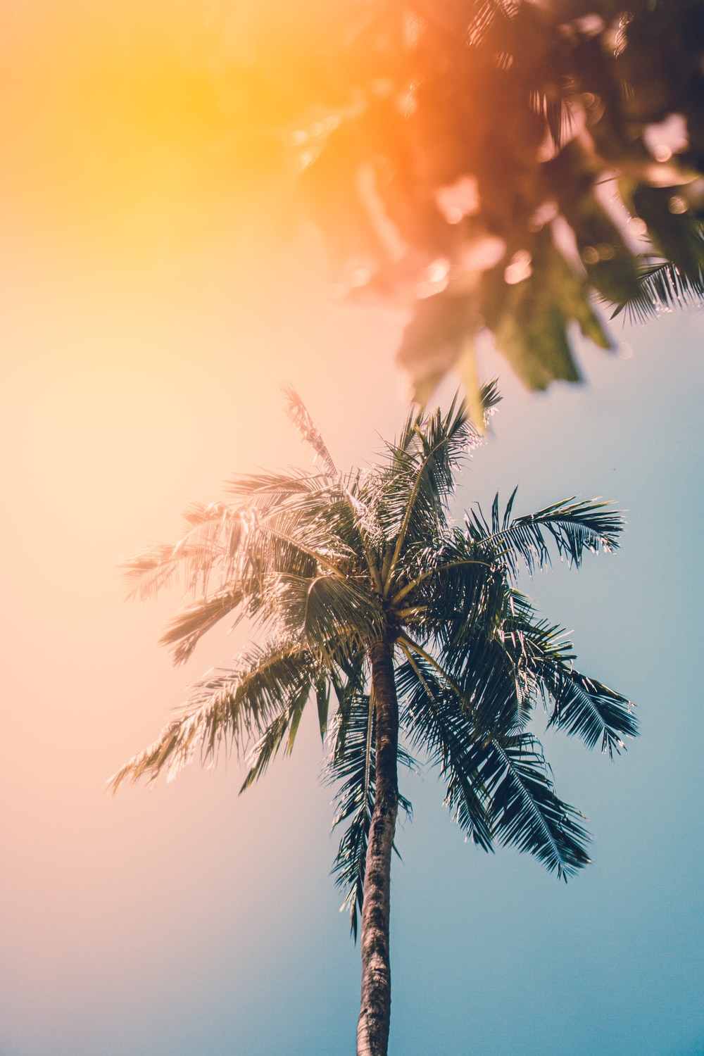photo of green palm trees
