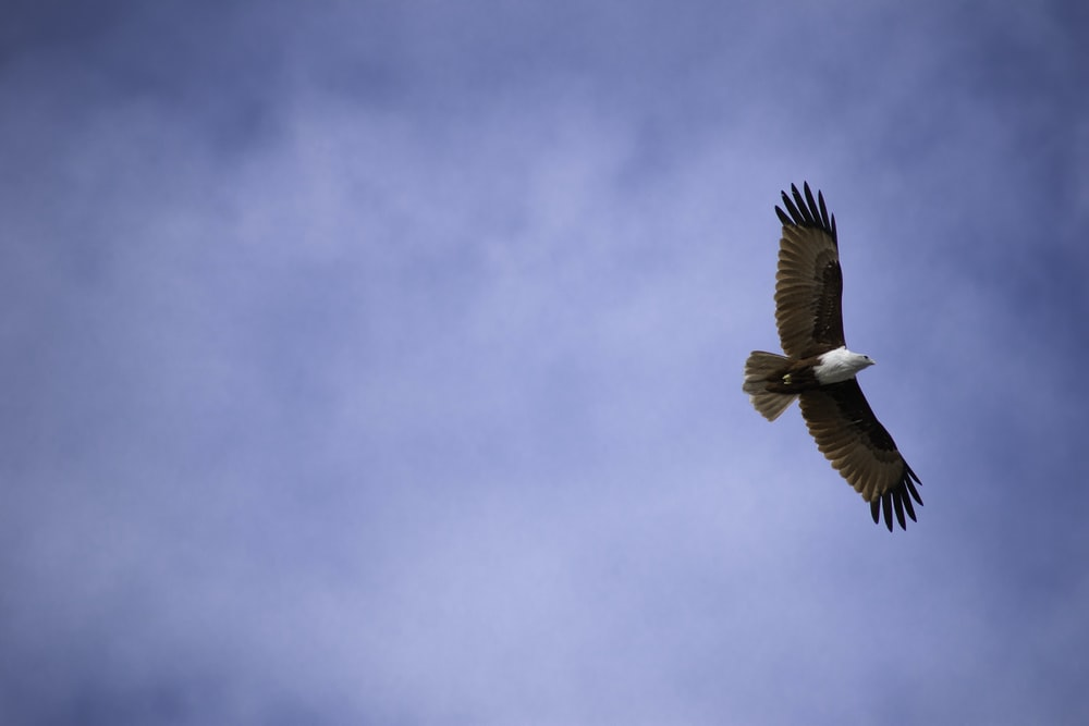 low-angle photography of white and brown eagle