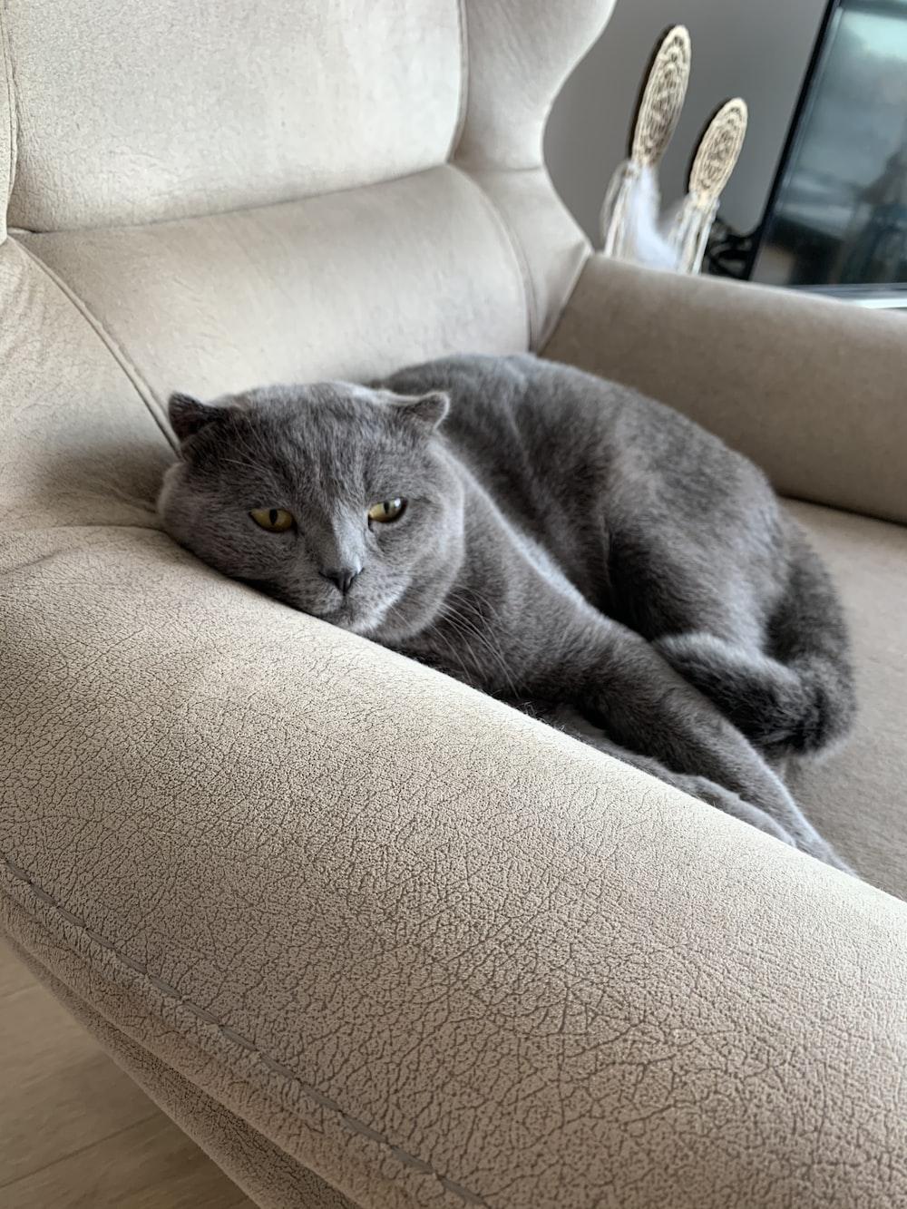 gray cat lying on sofa chair