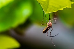 California Reports First Death from West Nile Virus in 2021