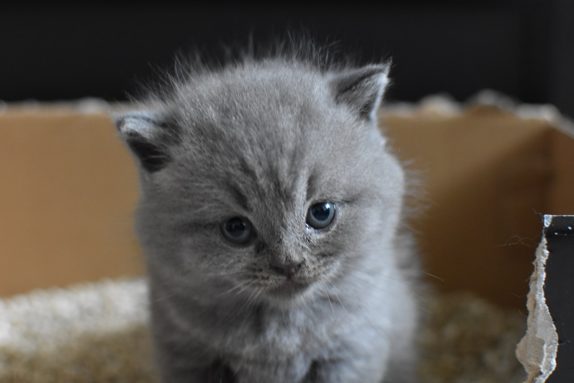Oh Sh*t! The Top 6 Reasons Your Cat Isn't Using The Litter Box