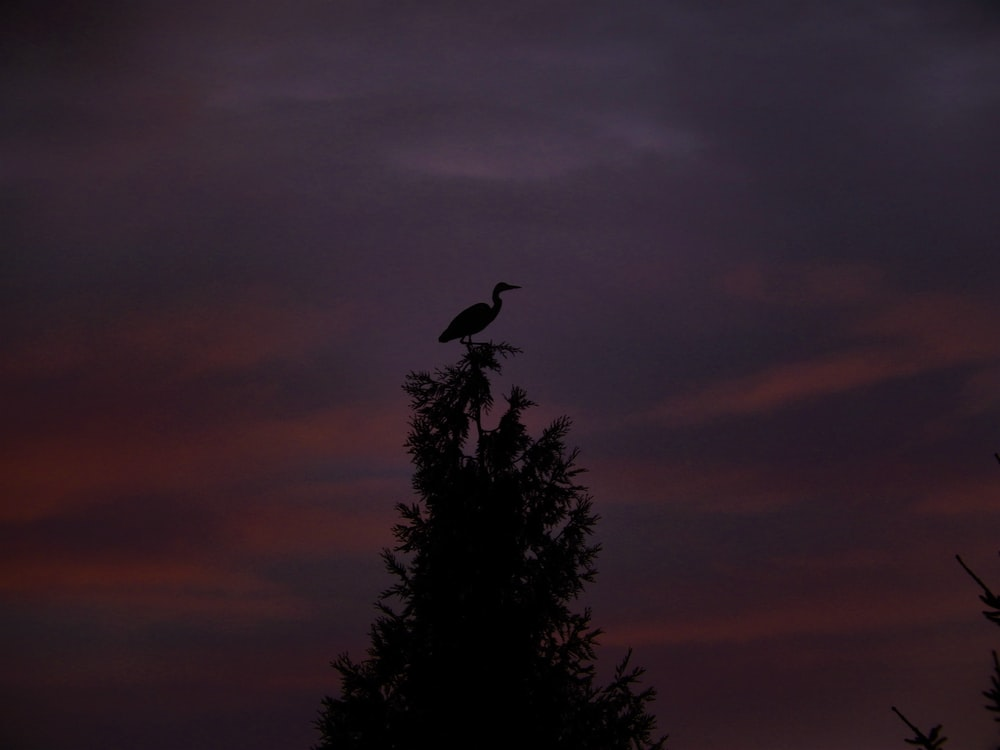 bird on the top of the tree