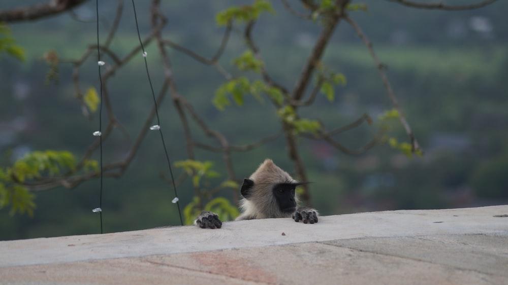 brown and black monkey peeking on wall during daytime
