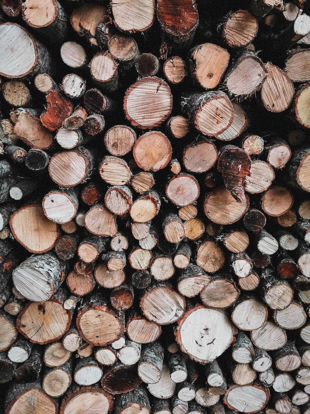 tree brunch