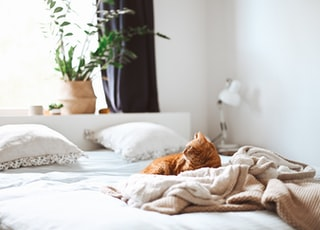 cat lying down in bed