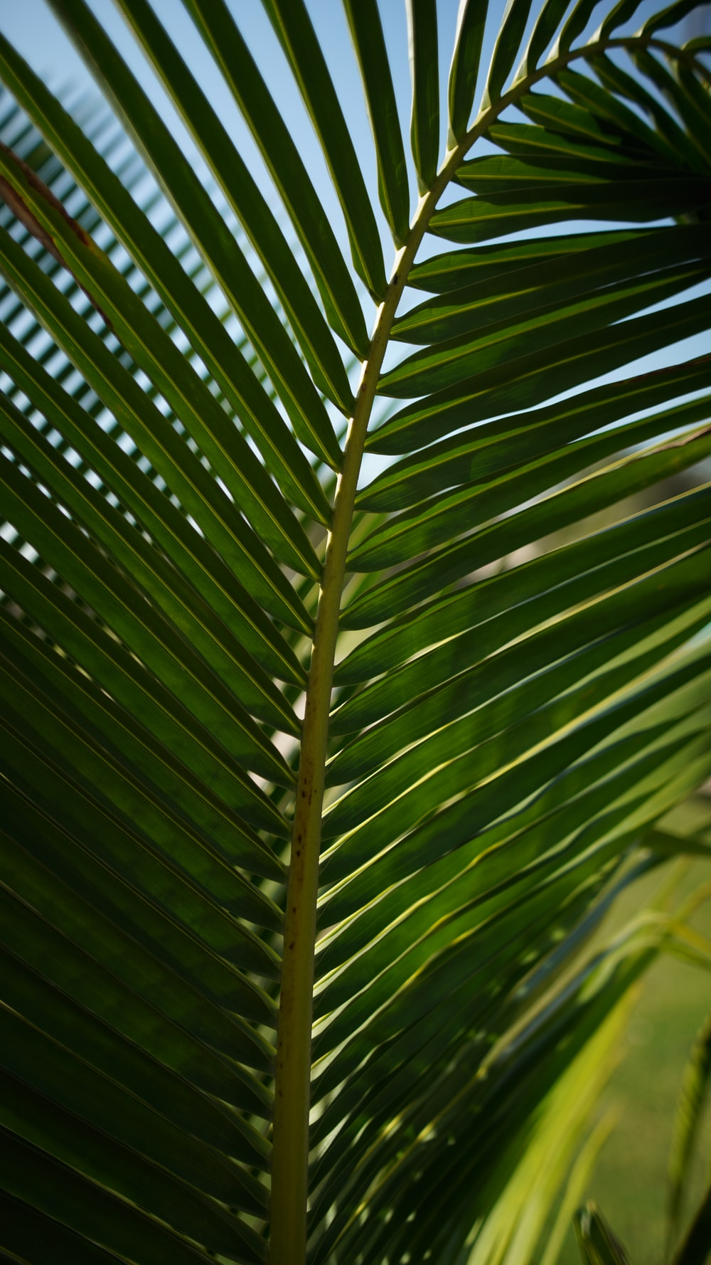 green palm leaf during daytime