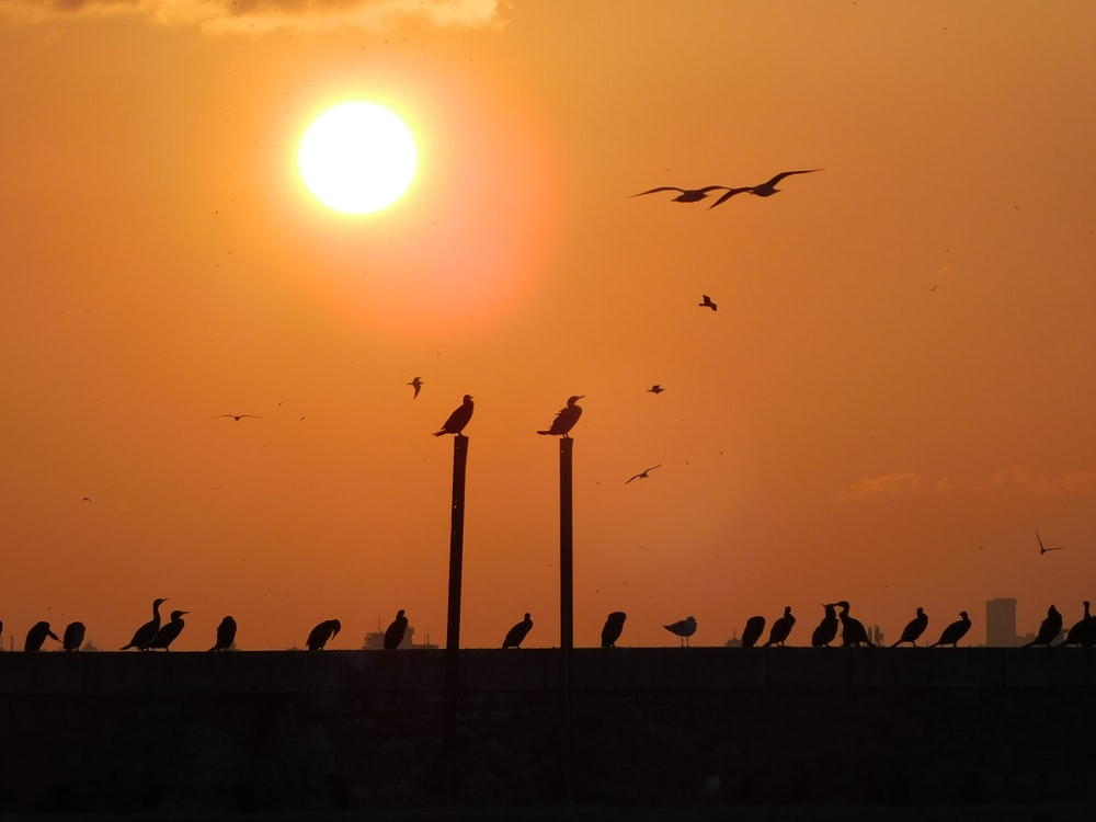 silhouette photography of birds