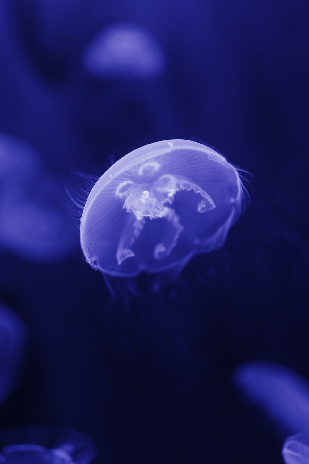 selective-focus photograph of jellyfish