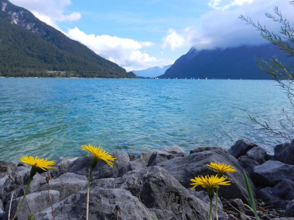 flowers near lake