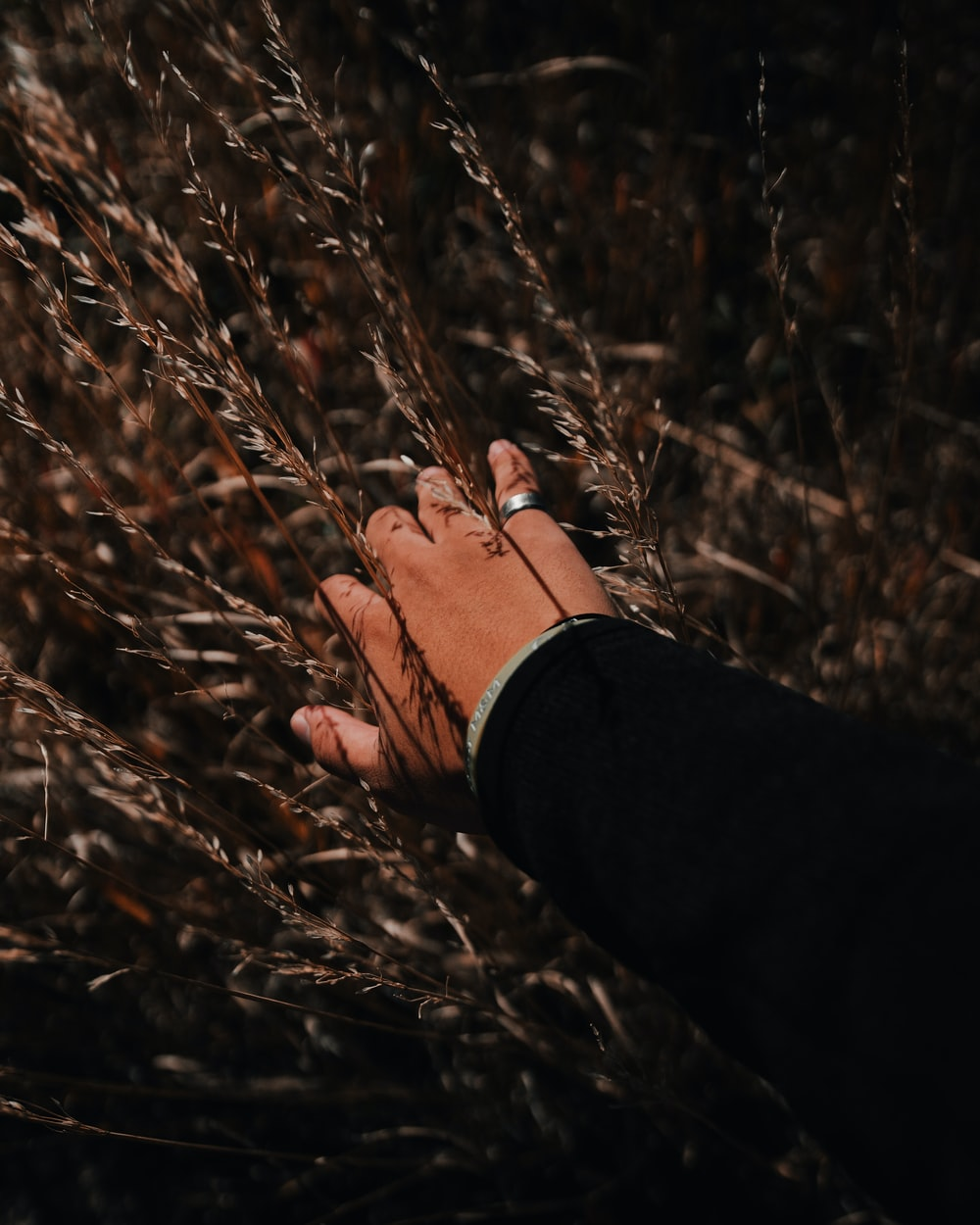 man's hand on plants