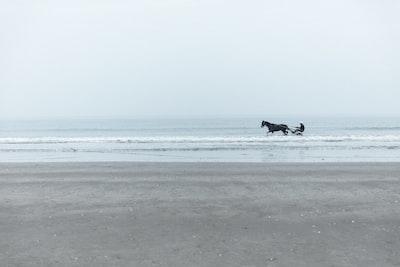 horse running in water