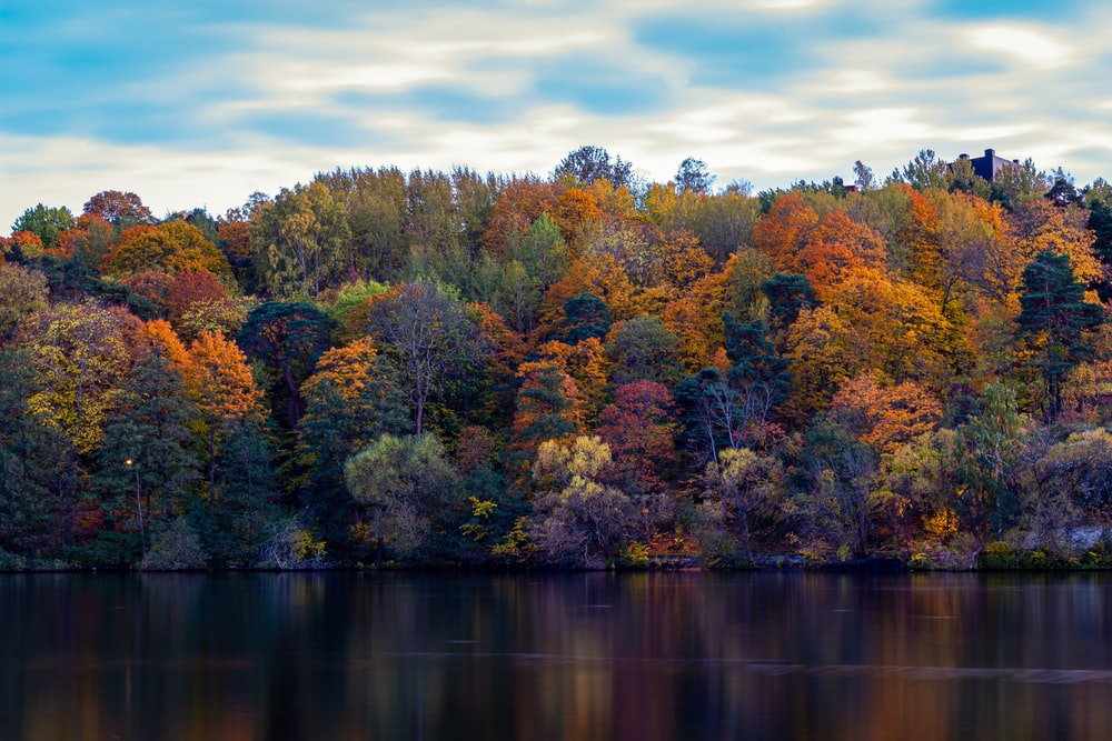 green and orange forest by a lake