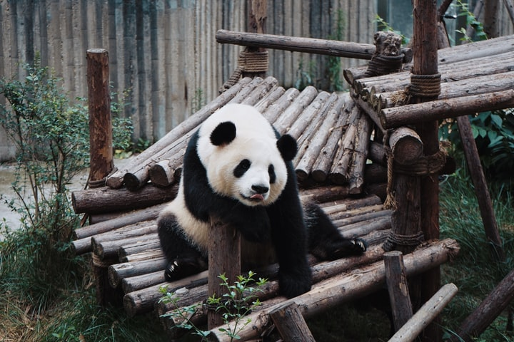 How to Plan a Day Trip to Chengdu