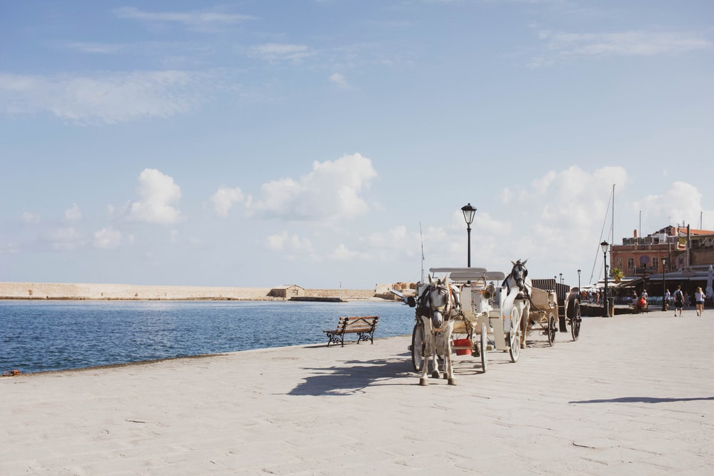 horse carriage on shore near body of water