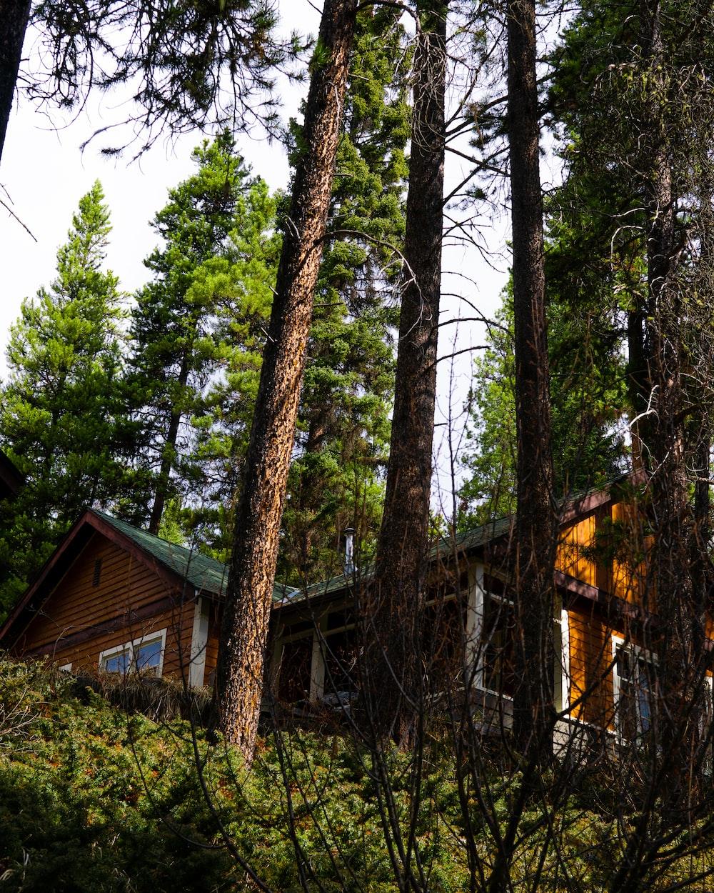 borwn house beside trees
