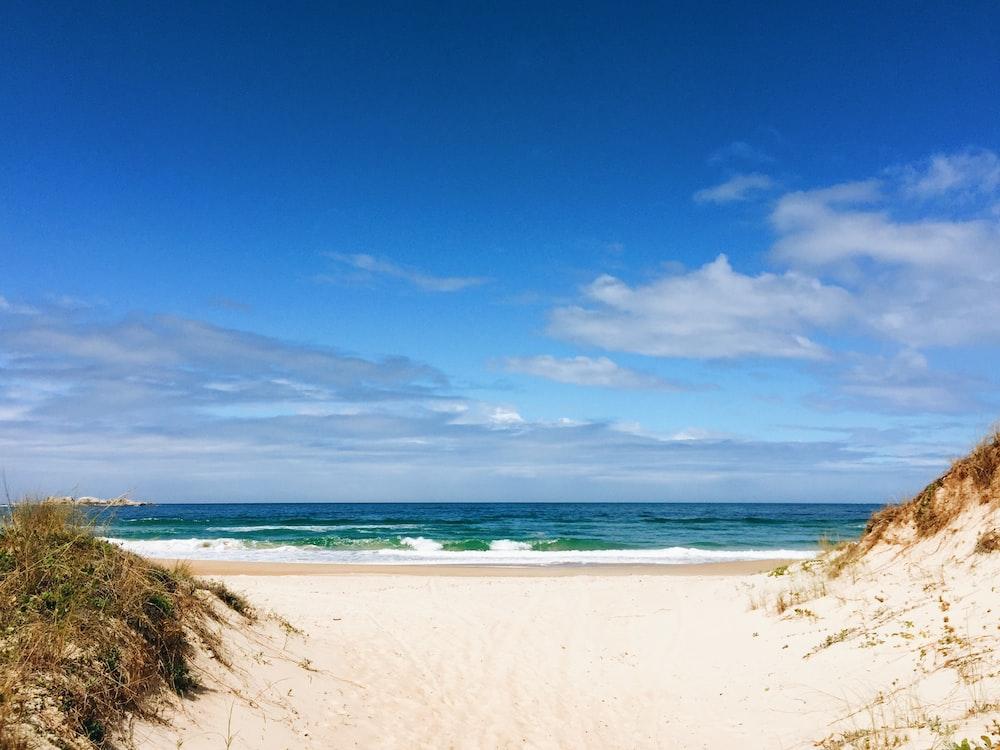 seashore and body of water