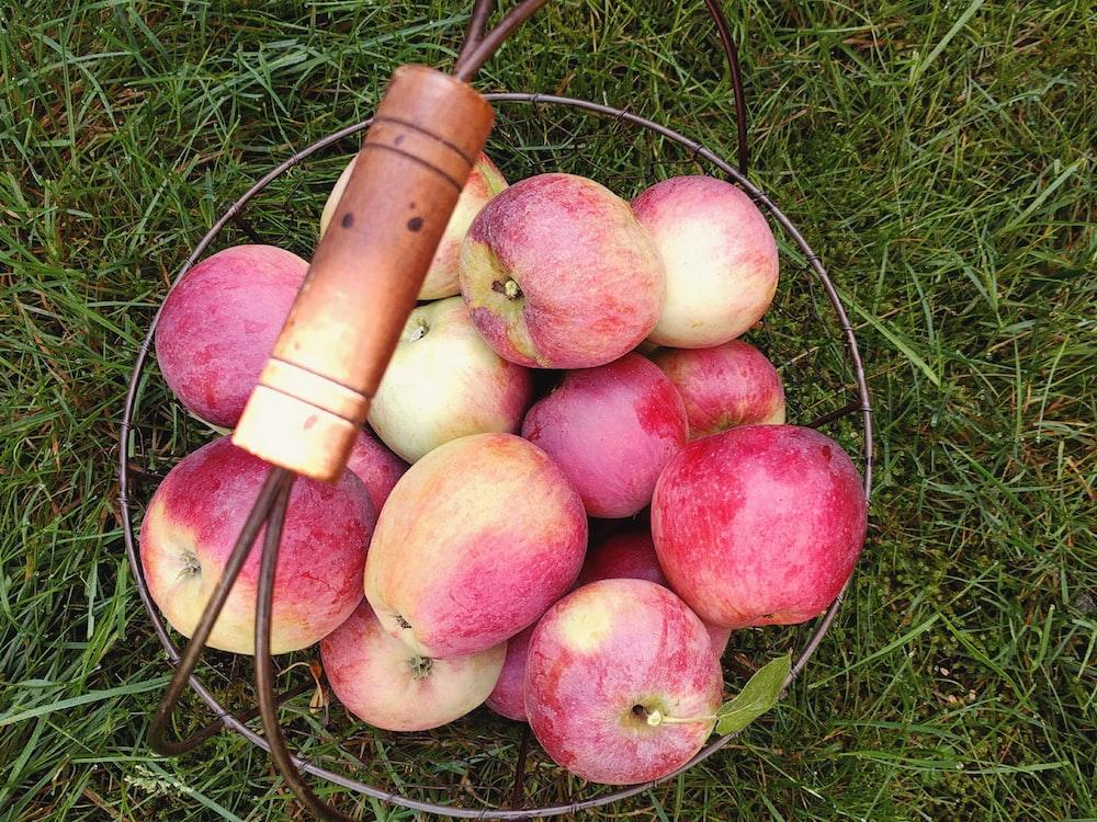 basket of apple fruits