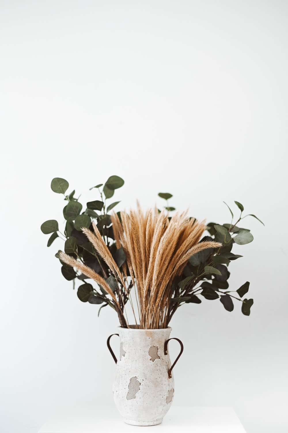 wheat and green leaf plant in vase
