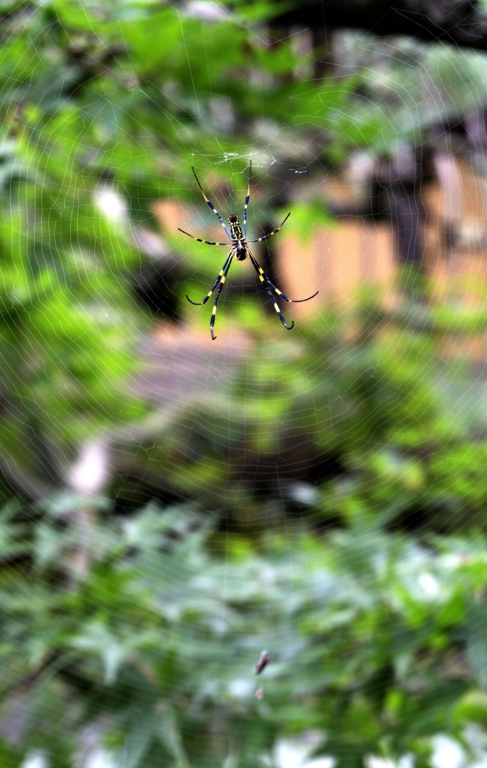 photo of black spider