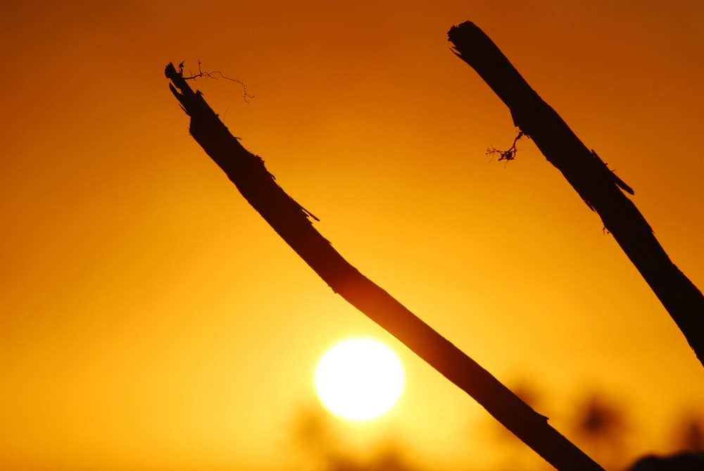 silhouette of two sticks