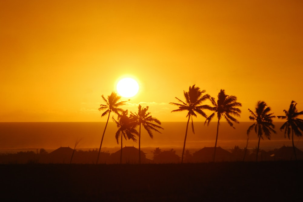 palm trees during golden hour