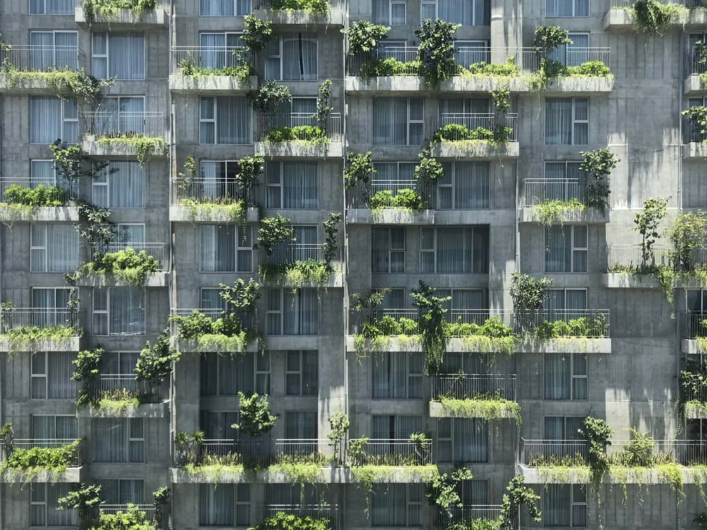 green plants on building