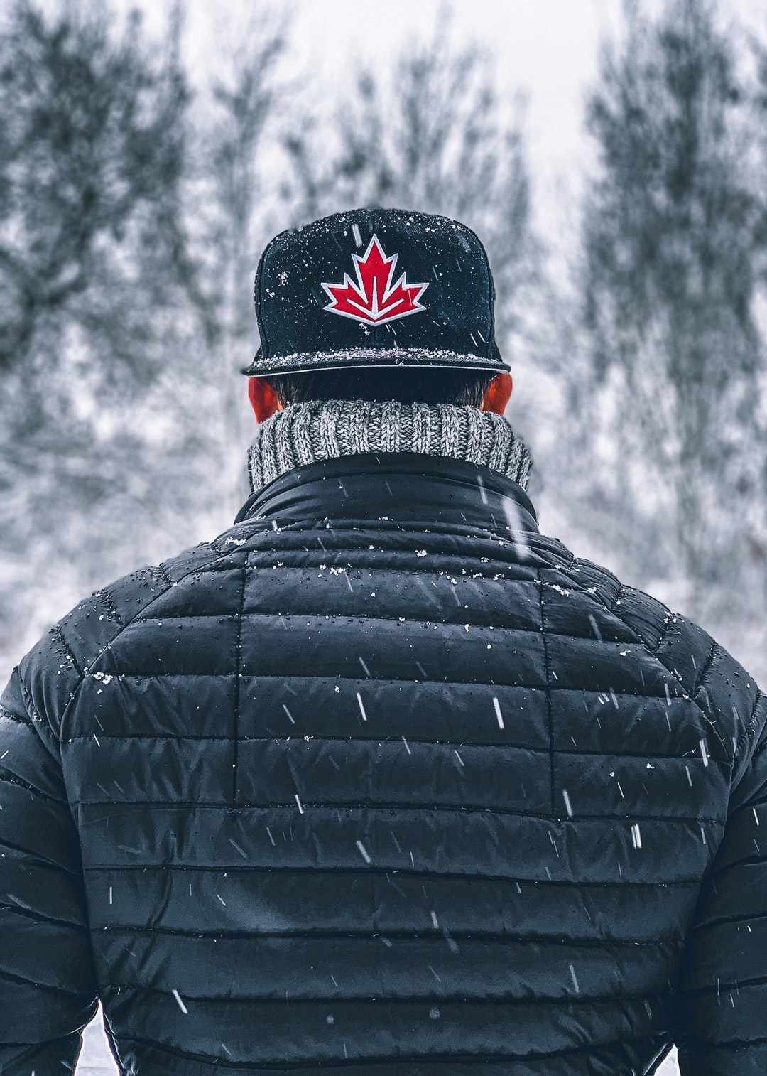Canadian Maple Leaf in the Snow