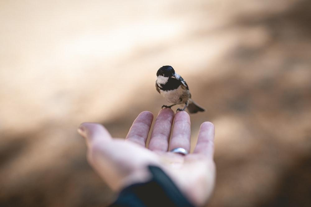 bird on human hand