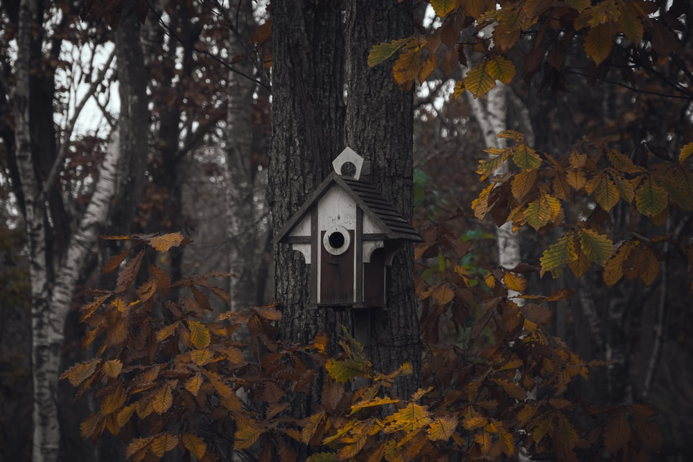 white and brown birdhouse attached to a tree