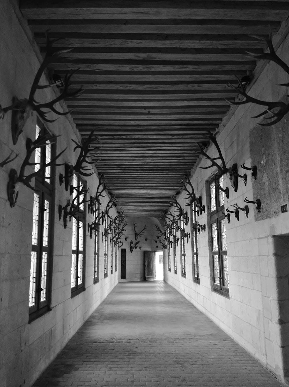 empty hallway with antlers