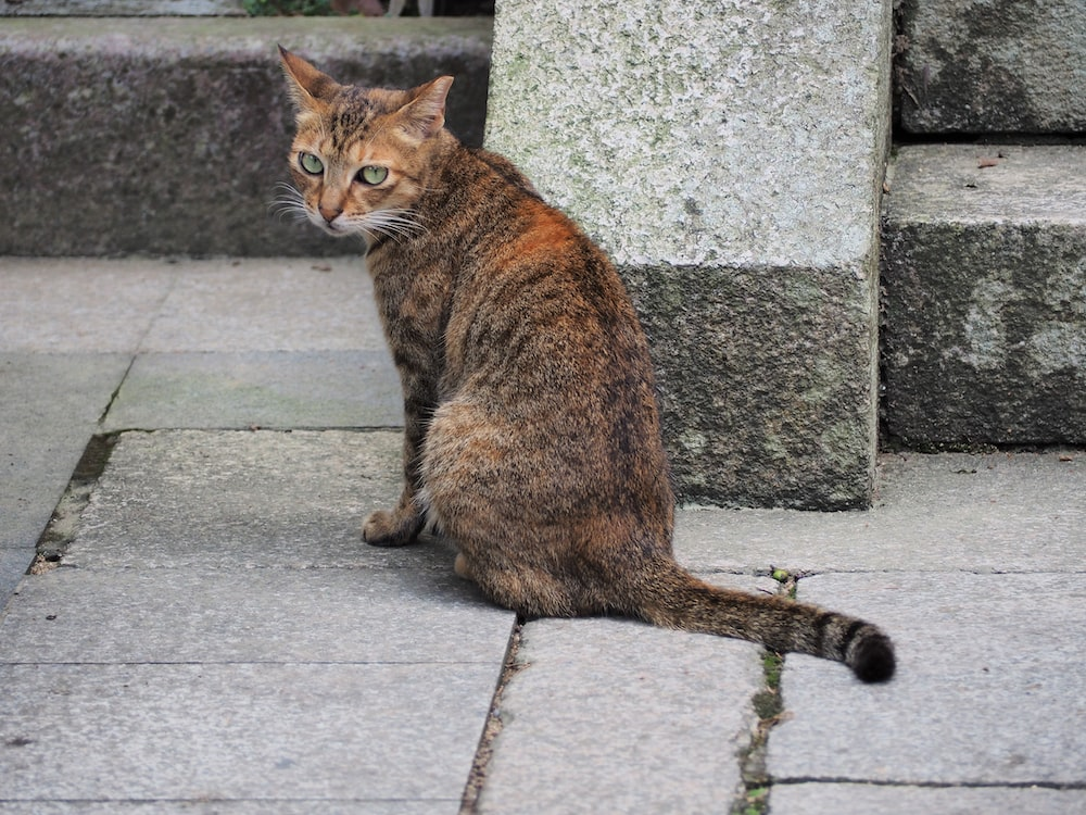 brown tabby cat sitting on concrete pavement