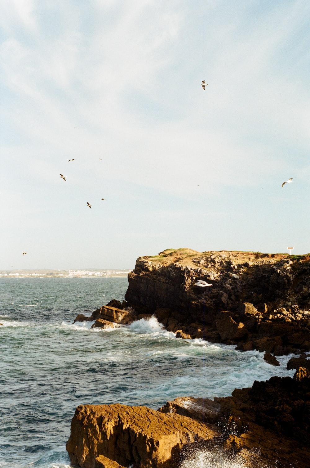 flock of birds flying under the sea
