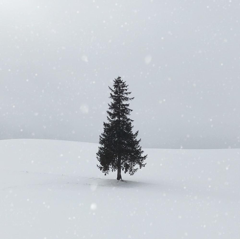 green-leaved tree