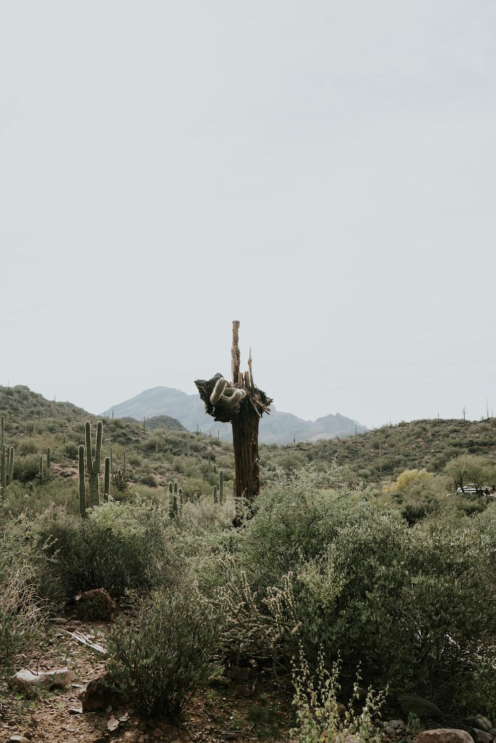 cactus plants on grass plants