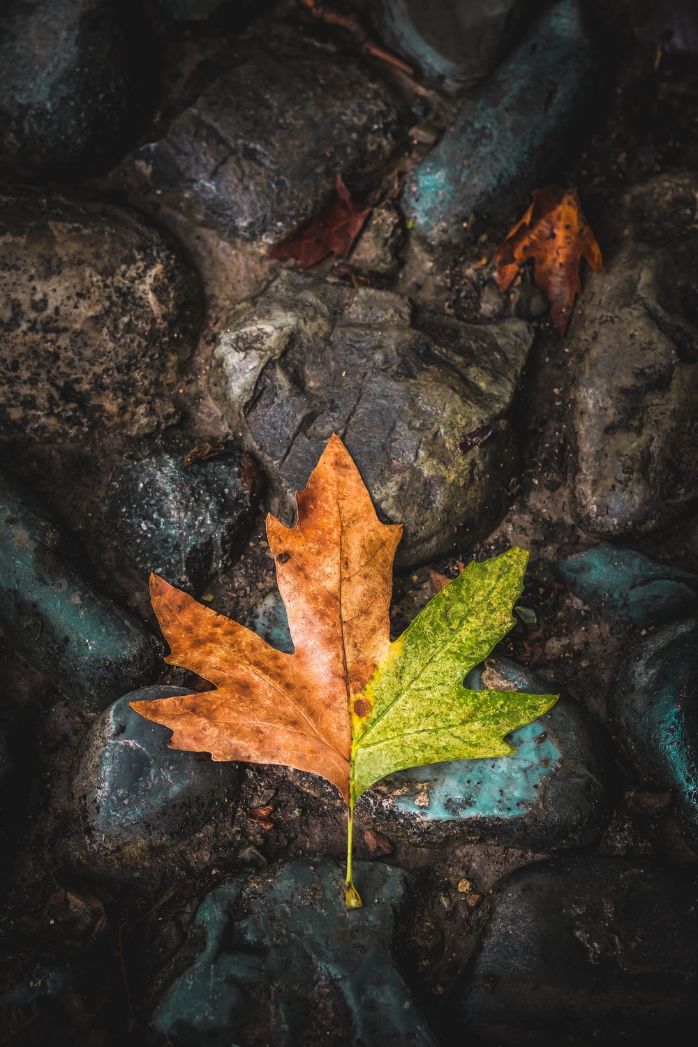 brown and green leaf on top of stones