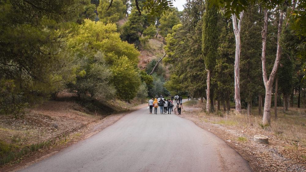 group of people walking on concrete street in between of trees