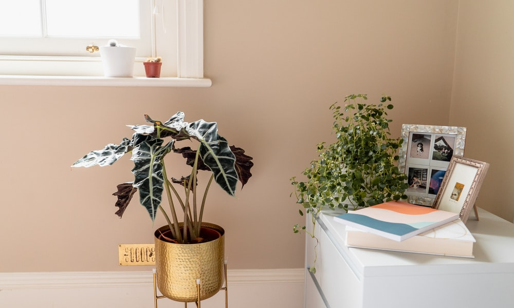 green-leafed potted plants beside a side table