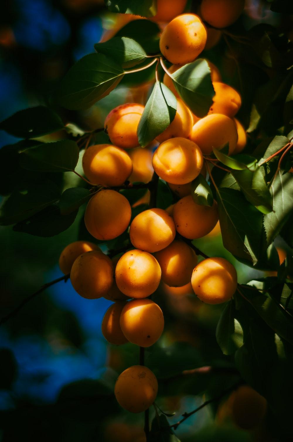 photo of orange fruits