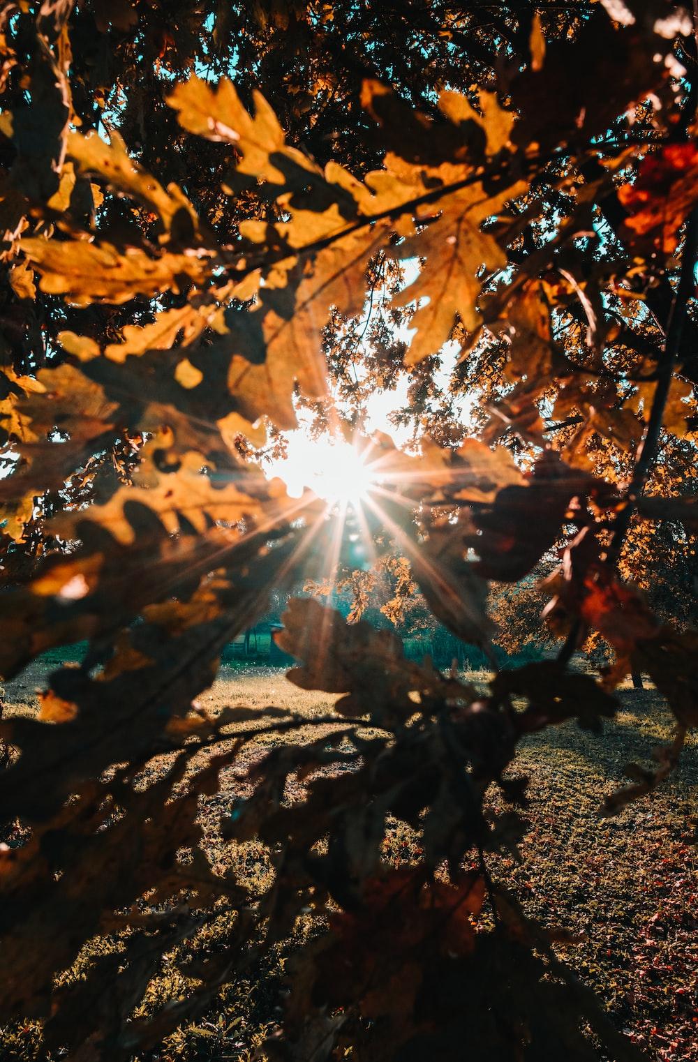 photo of tree sunset